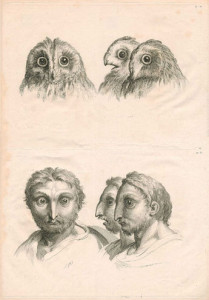 charles-le-brun-evolution-8
