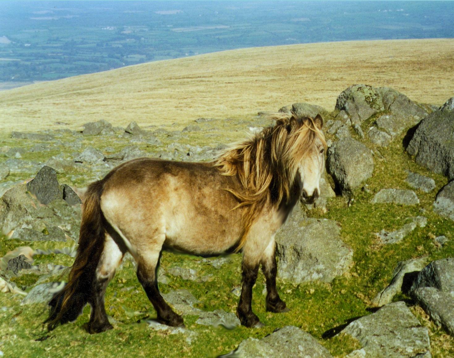pony -